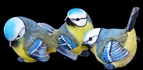 mėlynos tits,apdaila,paukščiai