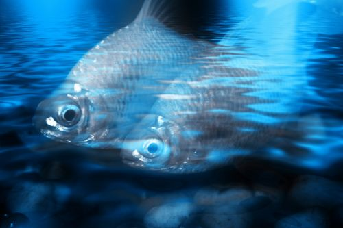 Blue Water Fishes