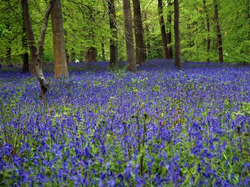 bluebell wood in autumn