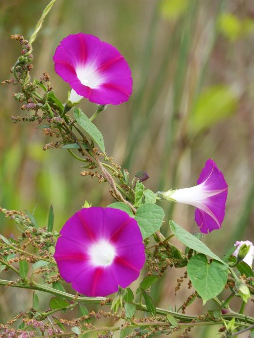 bluebells flowers beauty