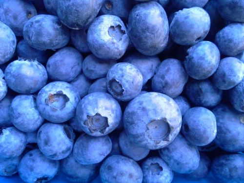 blueberries bless you nature