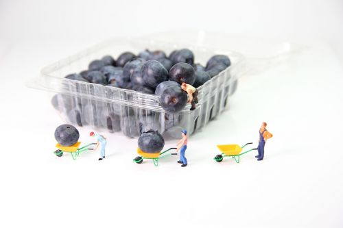 blueberries transport miniature figures