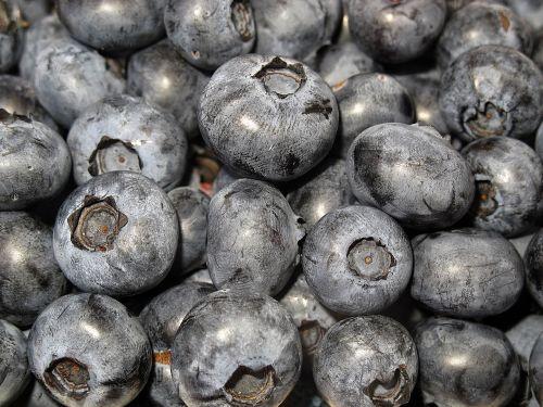 blueberry black berry vaccinium corymbosum