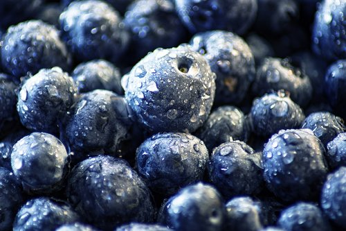 blueberry  black berry  moll berry