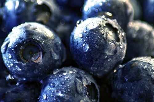 blueberry  black berry  moll berry