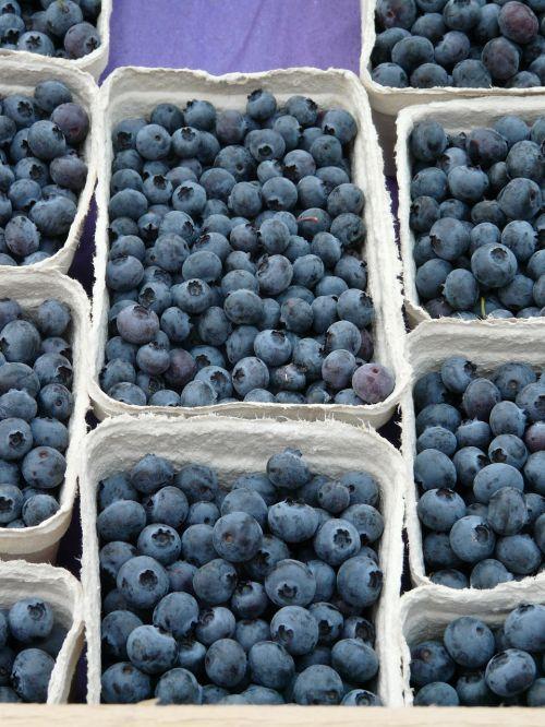 blueberry vaccinium myrtillus berries