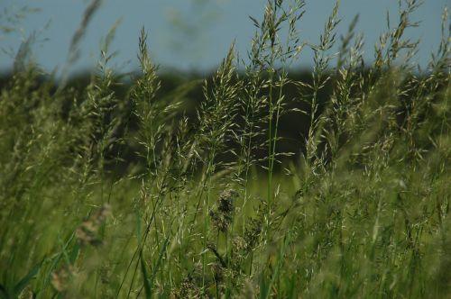 bluegrass landscape nature