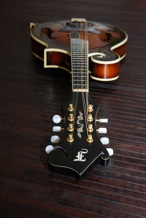 bluegrass mandolin mandolin instrument