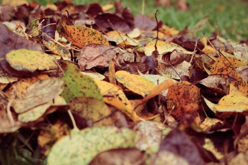 blur close-up colors