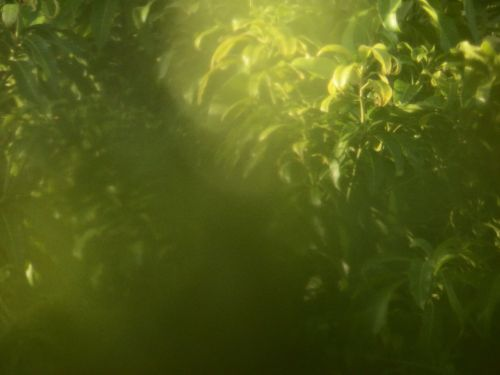 Blur Tropical Abstract Background