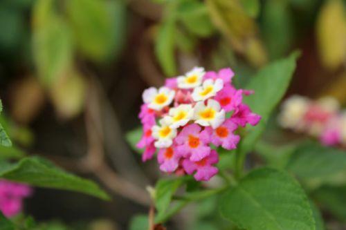 Blurry Tiny Flowers
