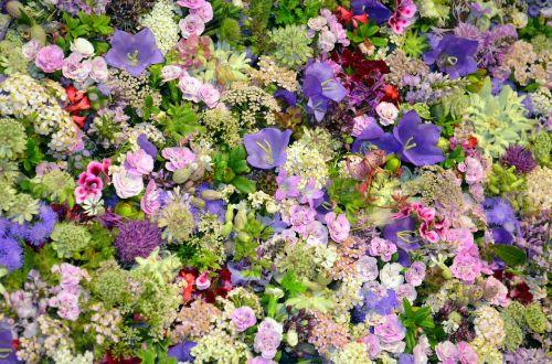 blütenmeer floristry campanula