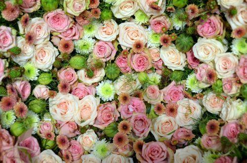 blütenmeer pink rose