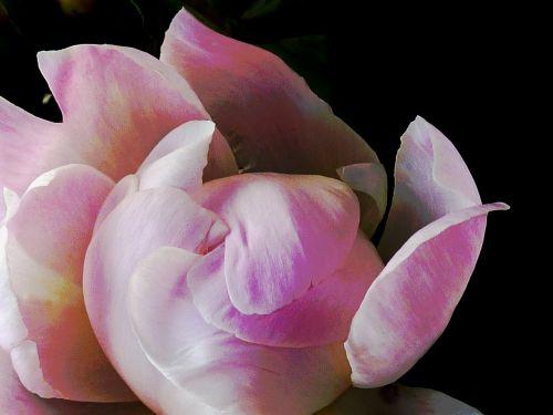 blütenzauber blossom bloom