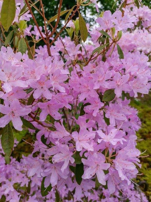blütenzauber  zauber  flowers