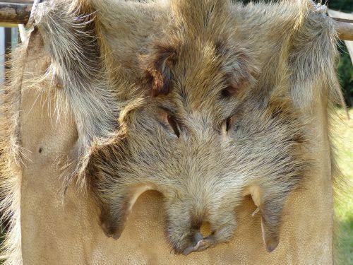 boar fur hunting