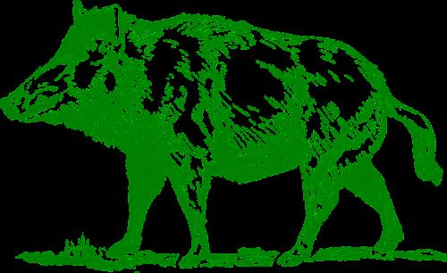 boar mammal animal