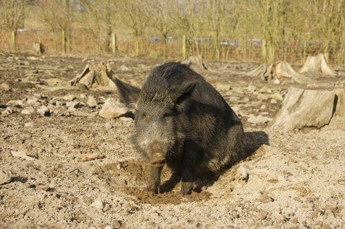 boar nature park holders