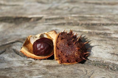 board chestnut wood