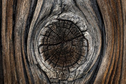 board wood branch