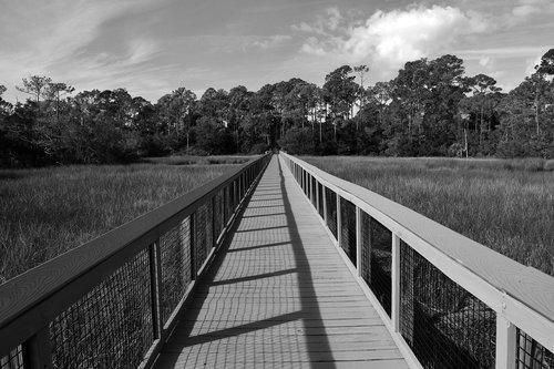 boardwalk  marshland  wooden