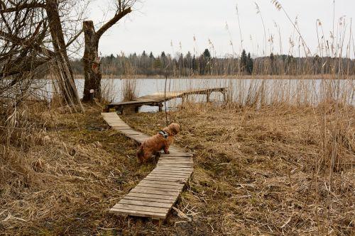 boardwalk wood planks planks