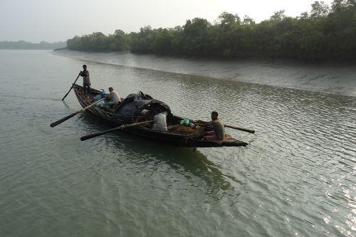 boat mangroves sundarbans