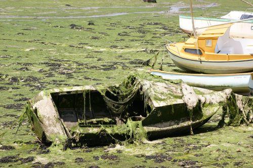 boat wreck algae