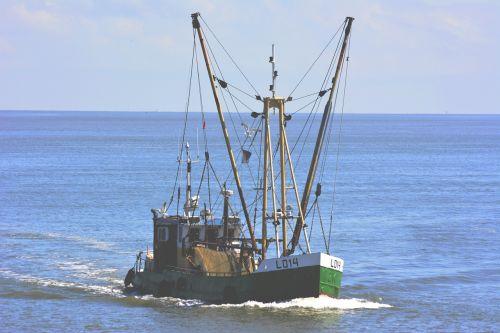 boat fish cutter