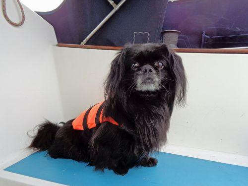 Boating Dog