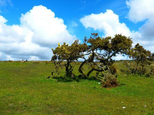 bodmin moor landscape moor