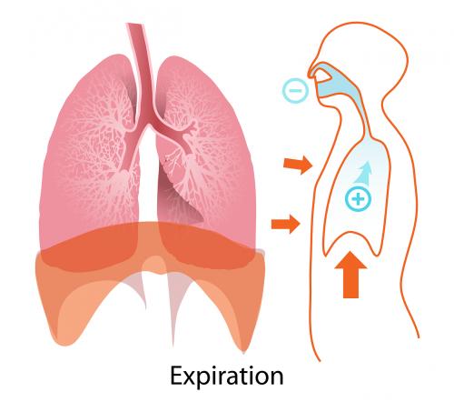 body human expiration