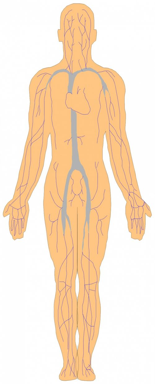 Body Parts 11