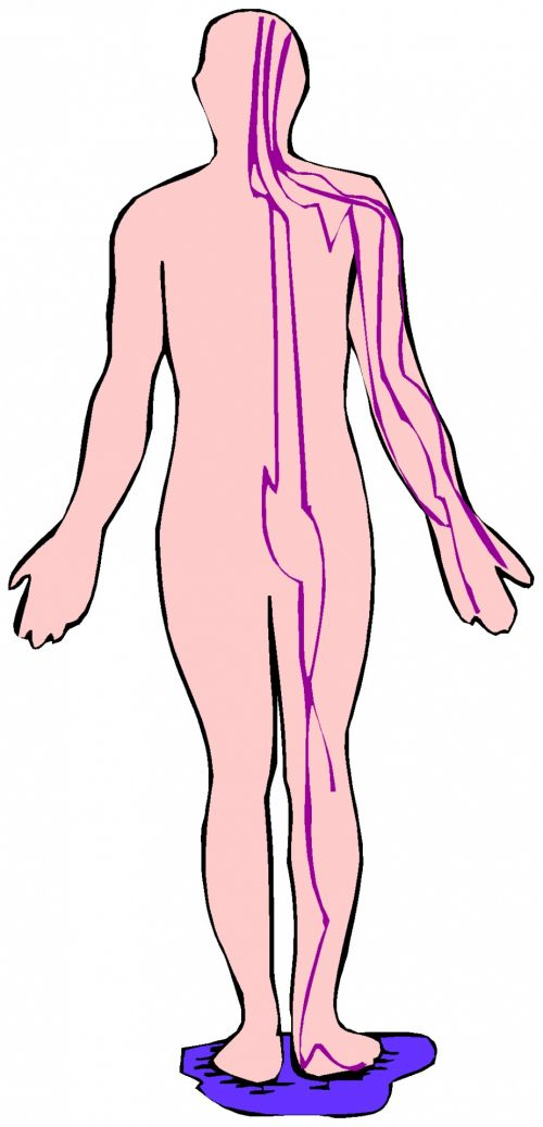 Body Parts 13