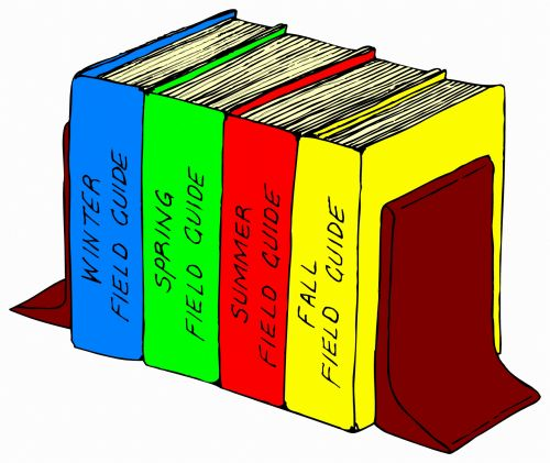 Bookshelf In Colors