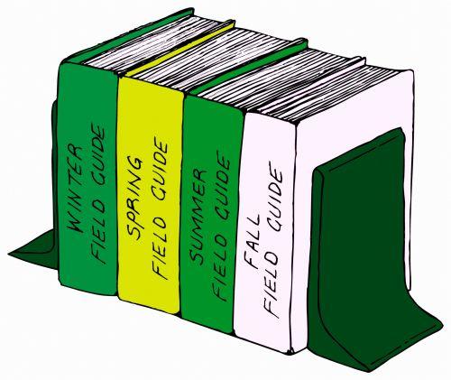 Colored Bookshelf With Books