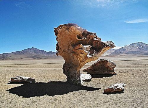 bolivia tree pierre