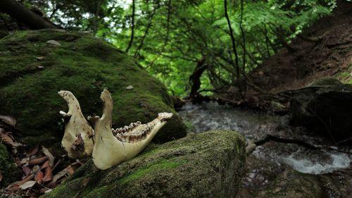 bone death mountain