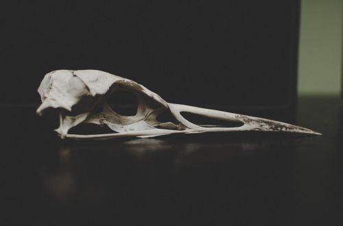 bone dead remnant