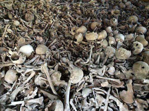 bone skull bones