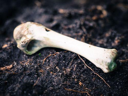 bone animal decay