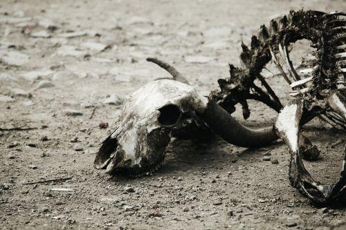 bones fossils decay