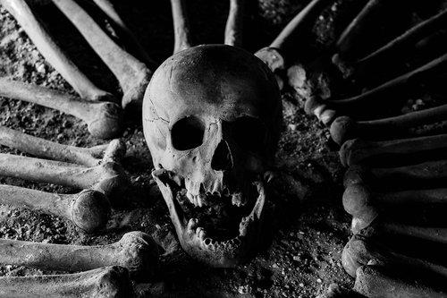 bones  skull  skeleton