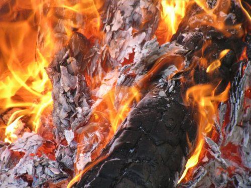bonfire fire forest