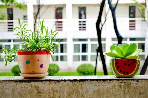 bonsai summer still life