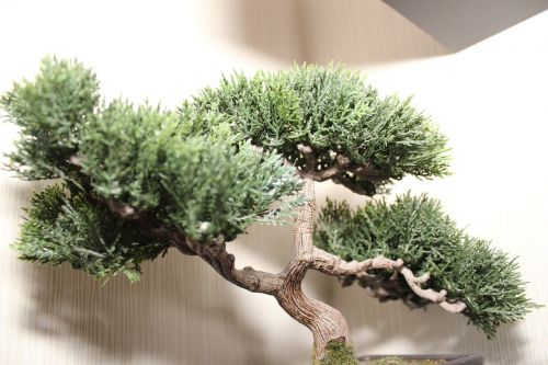 bonsai tree bonsai tree