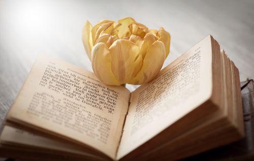 book font flower