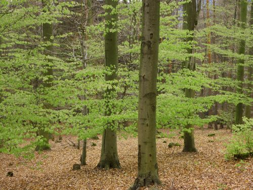 book palatinate forest spring
