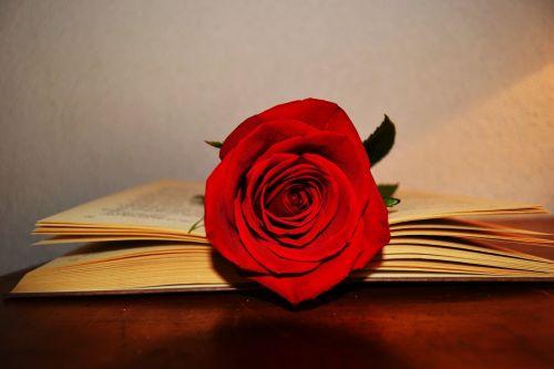book rose rose red