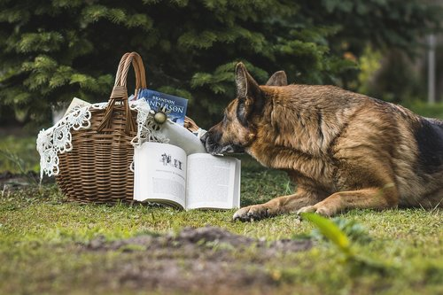 book  basket  shopping cart